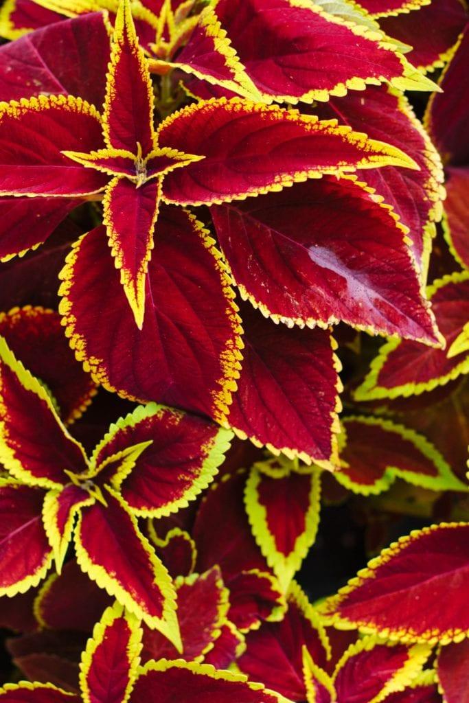 daronfarms-Greenhouse2014_033