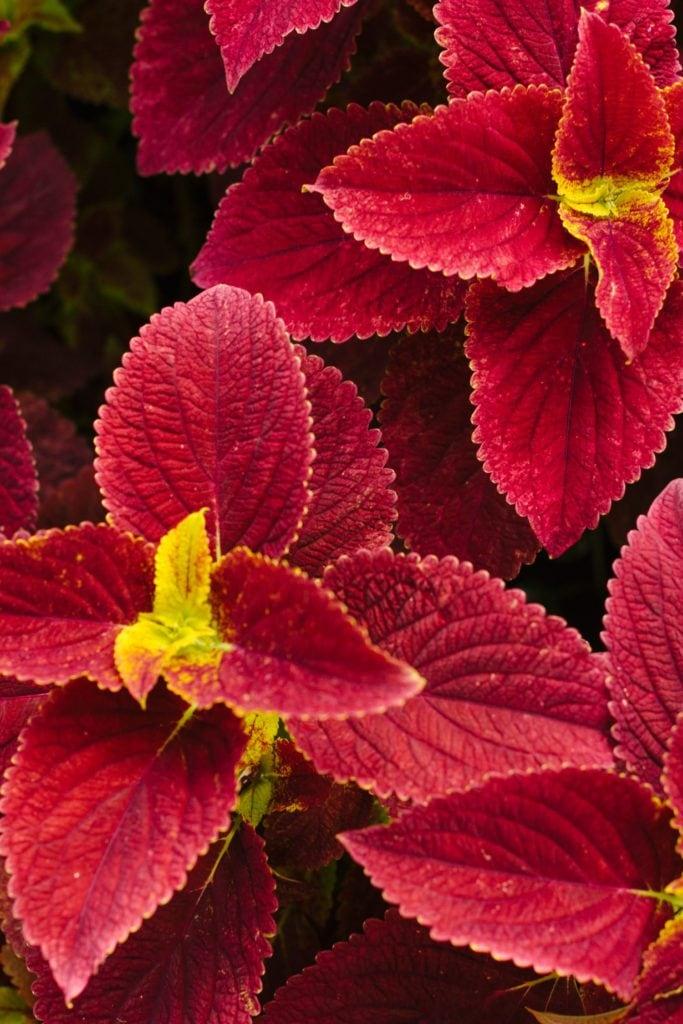 daronfarms-Greenhouse2014_034