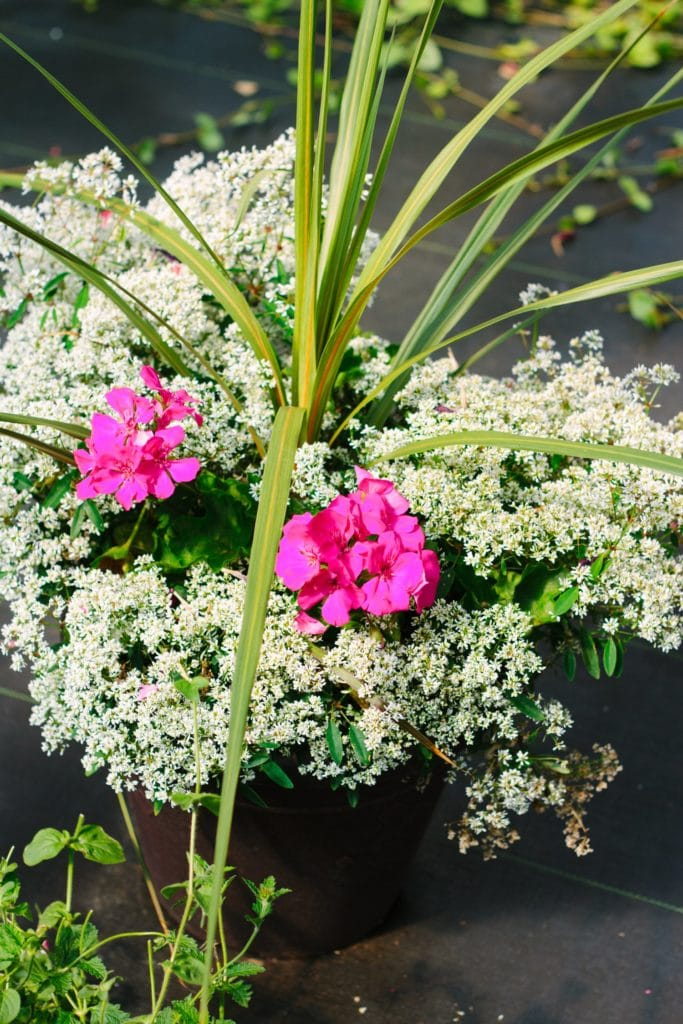 daronfarms-Greenhouse2014_037
